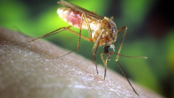 Le don du sang restreint à cause d'un virus du Nil présent dans le sud-est de la France