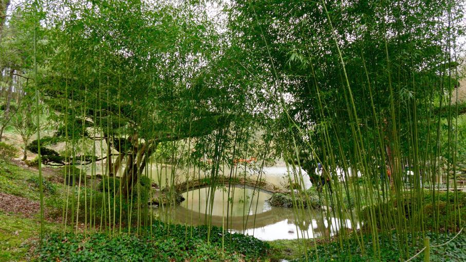 maine et loire le jardin japonais de maul vrier. Black Bedroom Furniture Sets. Home Design Ideas