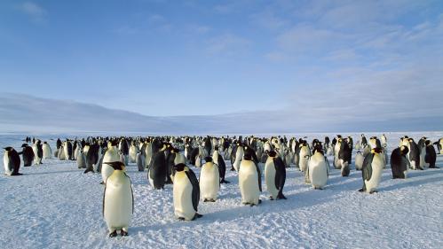 """TRIBUNE. """"Tout est ici plus fragile qu'ailleurs"""" : le plaidoyer du réalisateur Luc Jacquet pour la création d'un grand sanctuaire marin en Antarctique   https://www.francetvinfo.fr/monde/environnement/tribune-tout-est-ici-plus-fragile-qu-ailleurs-le-plaid"""
