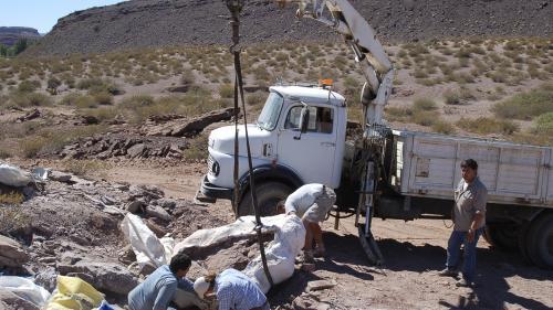 Argentine : une nouvelle espèce de dinosaure mesurant 12 mètres de long a été découverte