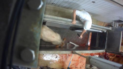 """Vidéo de L214 dans un abattoir bio : """"C'est du lynchage"""", estime le président de la FDSEA"""