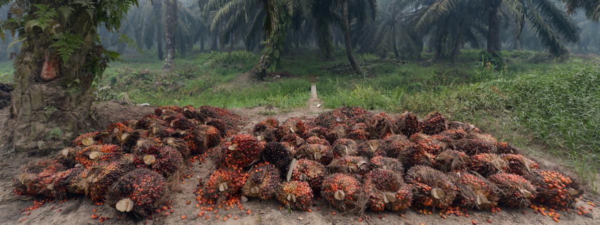 """Huile de palme : Greenpeace demande à Mondelēz de """"garantir qu'il n'y aura pas de déforestation dans ses biscuits Oreo"""""""