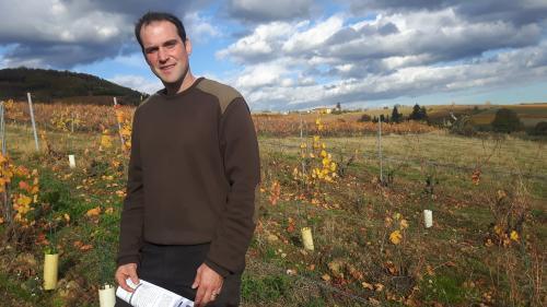 Dans le Beaujolais, des vignerons veulent produire le premier cru d'appellation 100% en bio
