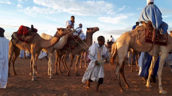 Une course de chameaux dans un village touareg de Mauritanie, en novembre 2018.