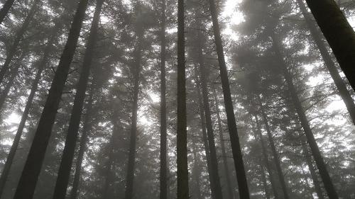 """ENQUETE FRANCEINFO. Quand """"l'industrialisation"""" transforme le visage des forêts françaises"""