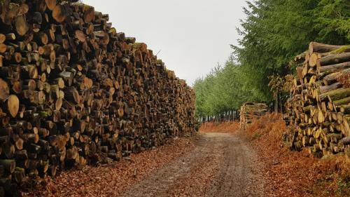 Comment l'exploitation industrielle du bois appauvrit la diversité des forêts françaises