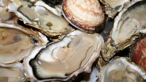 """Charente-Maritime : les ventes d'huîtres en baisse de 50% en raison des blocages routiers des """"gilets jaunes"""""""