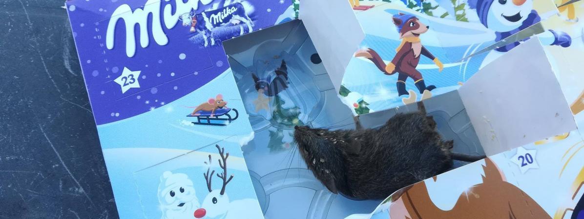 Hérault : elle découvre une souris dans le calendrier de l'Avent de sa fille