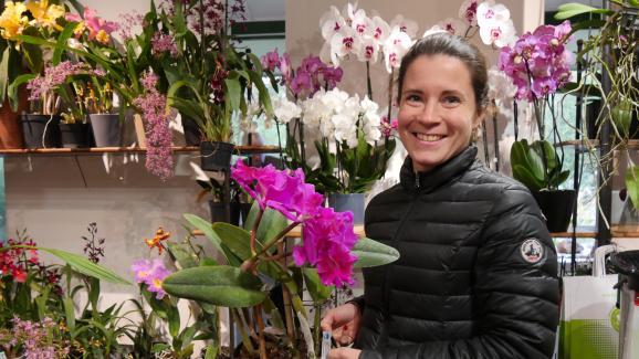 Jardin Prendre Soin De Son Orchidee Phalaenopsis