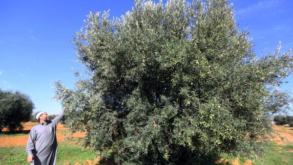 Mayenne : pourquoi cet agriculteur a choisi de replanter 1 000 arbres avant de partir en retraite
