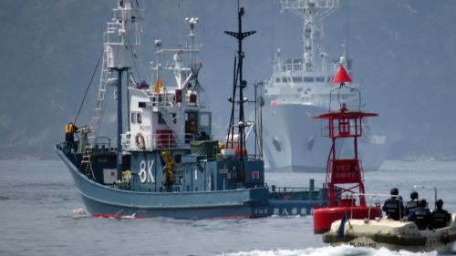 L'Union européenne interdit la pêche électrique