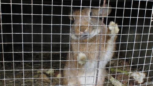 """""""Et le tueur de lapins, tu l'as trouvé ?"""" : dans les Côtes-d'Armor, les autorités sur la piste d'un insaisissable """"serial killer"""""""