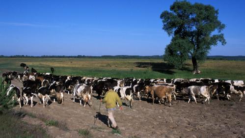 Près de 800 kilos de viande avariée polonaise ont été retrouvés en France dans neuf entreprises