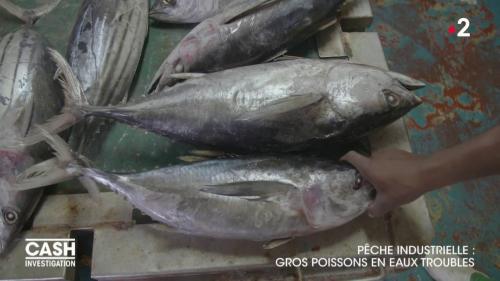 """DIRECT. Regardez """"Cash Investigation"""" sur les dérives de la pêche industrielle"""