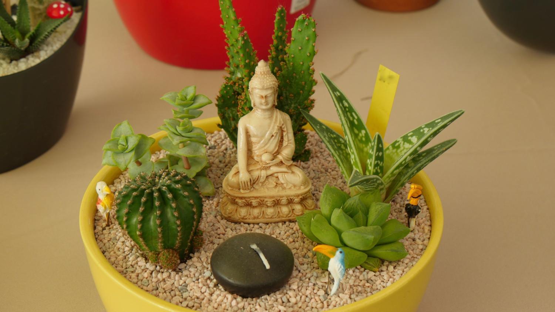 jardin cr ez votre mini jardin de plantes grasses. Black Bedroom Furniture Sets. Home Design Ideas