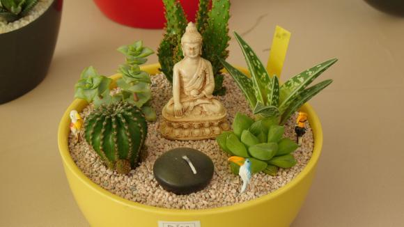 Jardin. Créez votre mini-jardin de plantes grasses