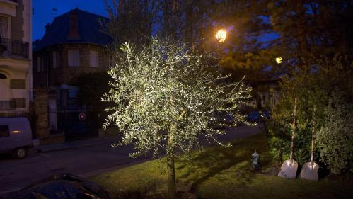 L'Association des maires de France appelle les élus à planter un arbre dans chaque commune pour lutter contre l'antisémitisme