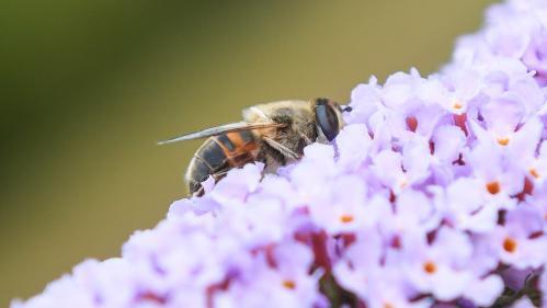 VIDEO. Espèces menacées d'extinction : bientôt un monde sans insectes ?