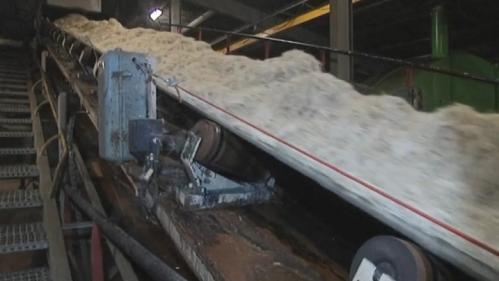 Emploi : fermeture de deux sucreries Saint-Louis