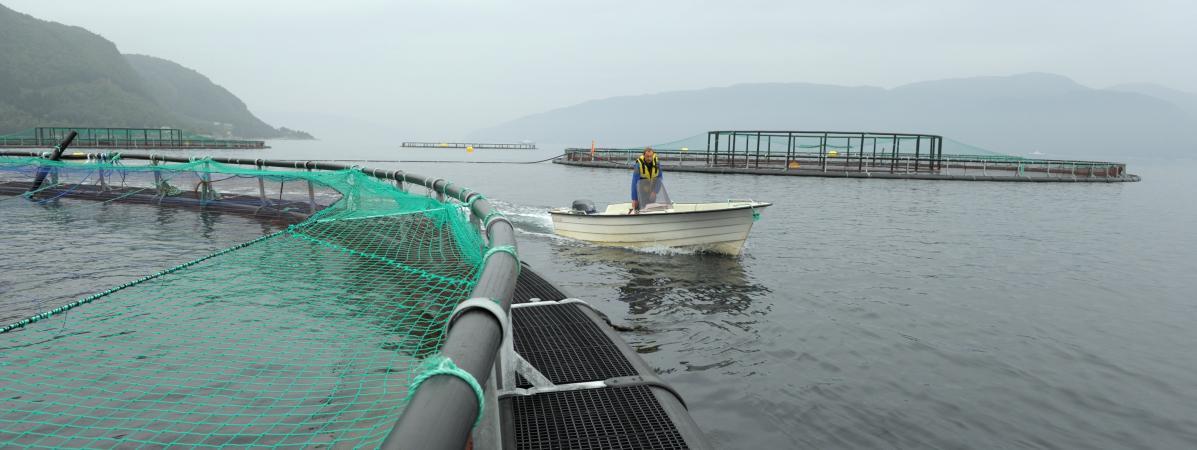 Perquisitions chez des éleveurs de saumon, soupçonnés d'entente