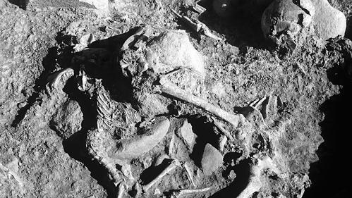 Des hommes préhistoriques aimaient leurs chiens, jusque dans la tombe