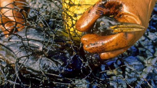 """RECIT. Le 24 mars 1989, l'""""Exxon Valdez"""" noircit le golfe d'Alaska avec 39000 tonnes de pétrole"""