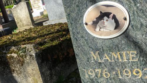 """Kiki, Bibiche, Elvis… Bienvenue au cimetière des """"bêtes à chagrin"""""""