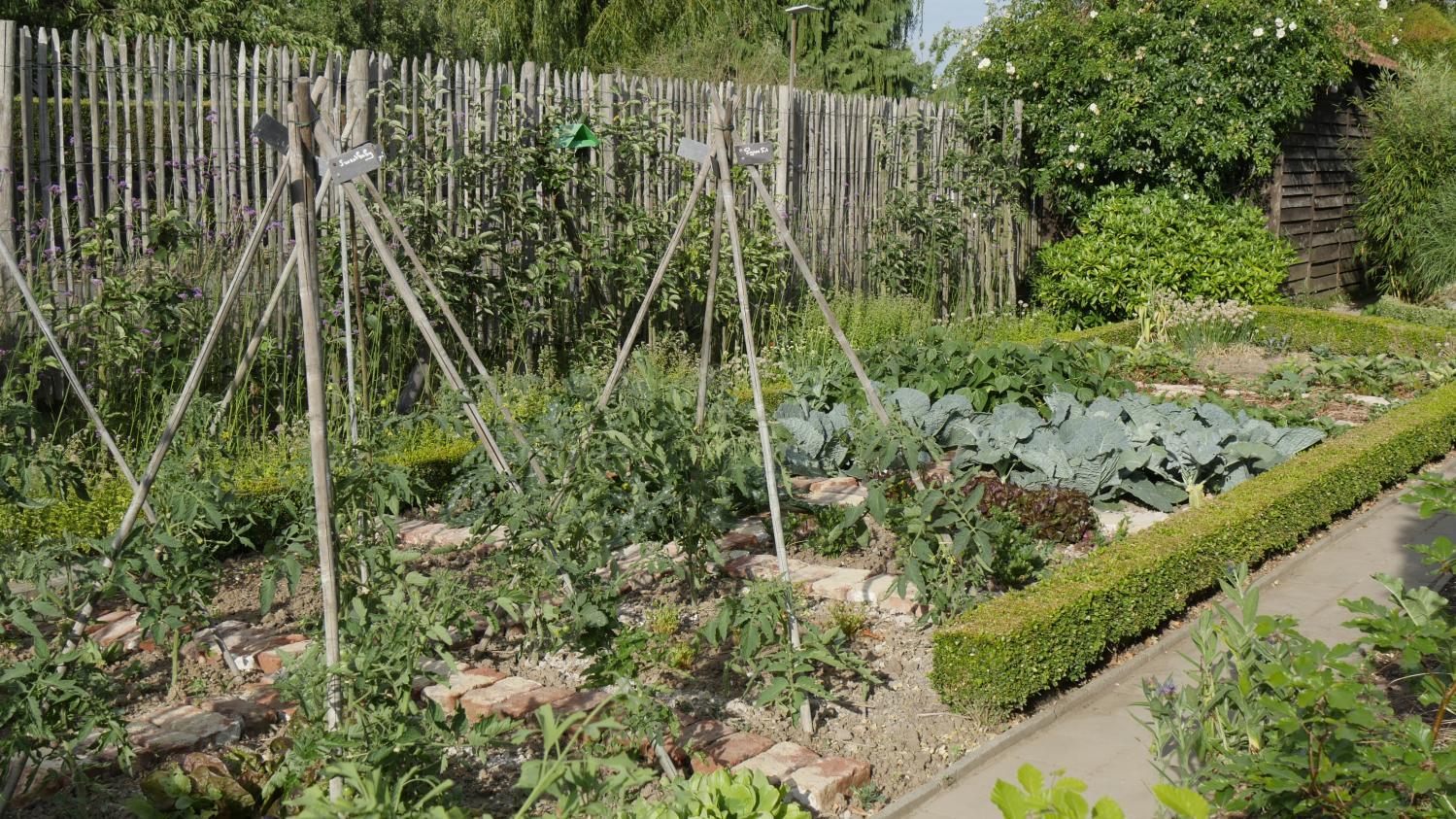 Le Jardin Potager En Janvier jardin. potager, les semis à à la volée, en ligne et en poquet