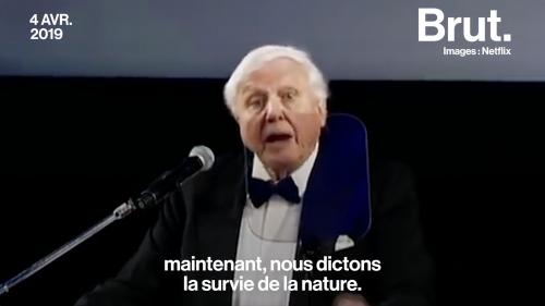"VIDEO. Le naturaliste David Attenborough alerte sur l'""extinction de masse"" que connaît la Terre"