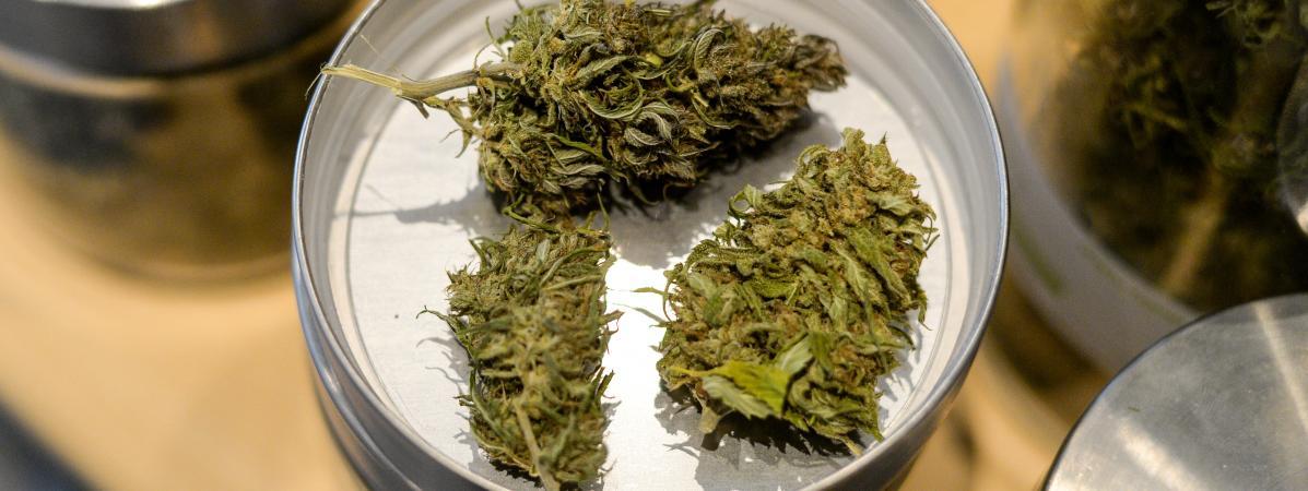 Le cannabis reste le stupéfiant le plus consommé en France, les drogues de synthèses de plus en plus présentes