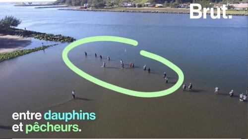 VIDEO. Au Brésil, les dauphins et les hommes collaborent pour pêcher ensemble