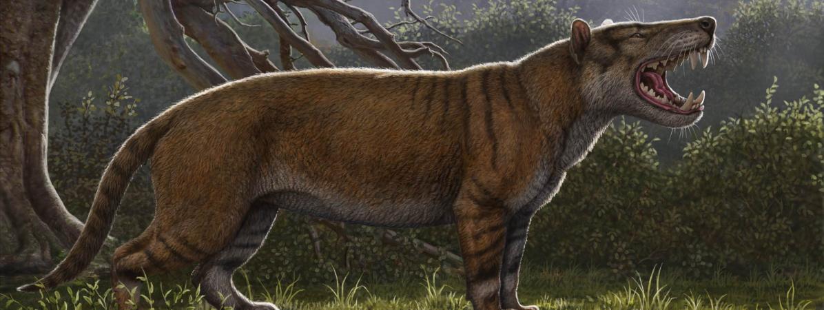 L'un des plus grands mammifères carnivores terrestres découvert au Kenya