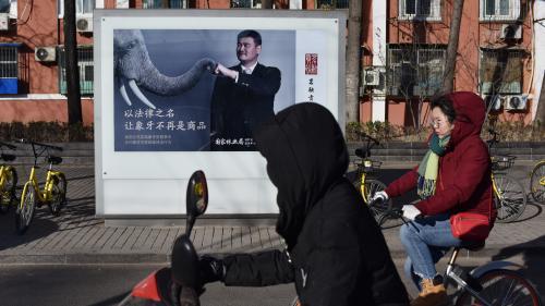 Chine : la saisie de 2 750 défenses d'éléphant permet le démantèlement d'un gang international