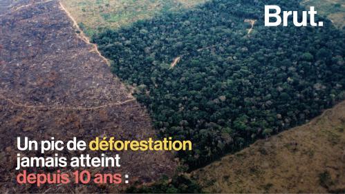 VIDEO. L'Amazonie connaît un pic de déforestation, le pire depuis 10 ans