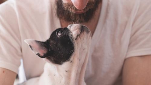 Une barbe abrite plus de bactéries que les chiens