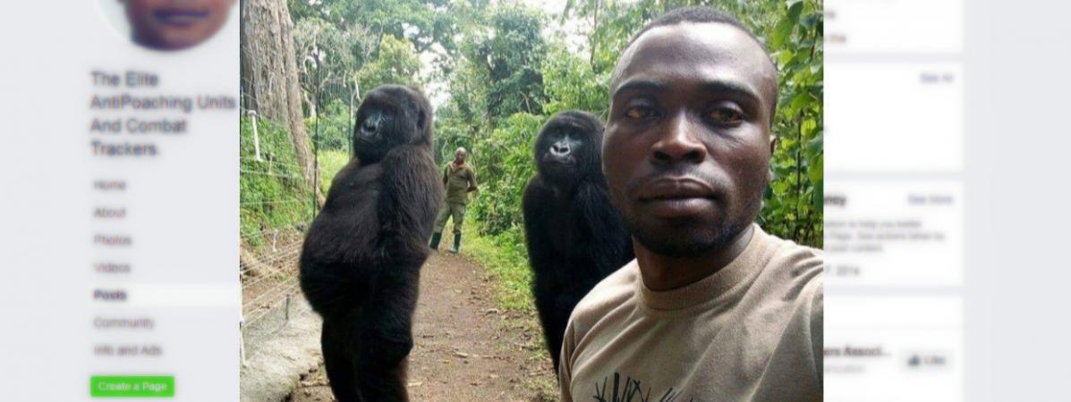 Un garde forestier du parc national des Virunga, en République démocractique du Congo, avec deux gorilles, sur une photo postée le 18 avril 2019.