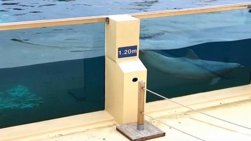 """VIDEO. """"Les dauphins ne peuvent même pas plonger"""" : une association porte plainte contre le parc Marineland"""