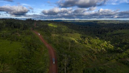 En 2018, 12millions d'hectares de forêts tropicales ont disparu