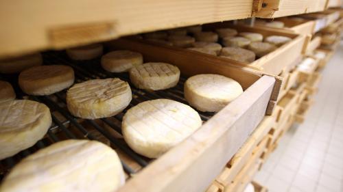 Alimentation : les fromages Saint-Félicien et Saint-Marcellin retirés de la vente par mesure de précaution