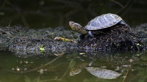 Sommet de la biodiversité : dans la réserve naturelle de la Massone, des trésors à l'état sauvage