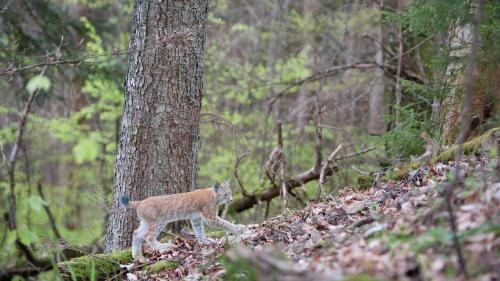 """VIDEOS. Regardez """"Les Gardiens du monde sauvage"""", le feuilleton du """"13heures"""" sur les espèces menacées"""