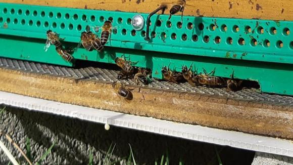 Les abeilles sont des maillons indispensables à la biodiversité.