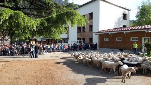 Isère : ils inscrivent des moutons à l'école pour éviter une fermeture de classe