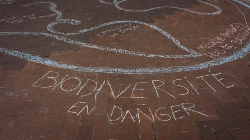 """VIDEO. """"Tout n'est que complémentarité dans l'édifice du vivant"""" : Fanny Agostini alerte sur la dégradation de la biodiversité"""