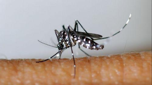 Une nouvelle technique pour éradiquer le moustique tigre testée près de Grenoble (et elle est entièrement bio)
