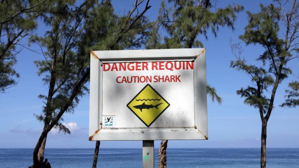 La Réunion : trois requins tués en une nuit près de Saint-Gilles
