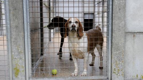 Chiens, chats, chevaux... Plus de 1100 animaux adoptés lors des journées portes ouvertes de la SPA