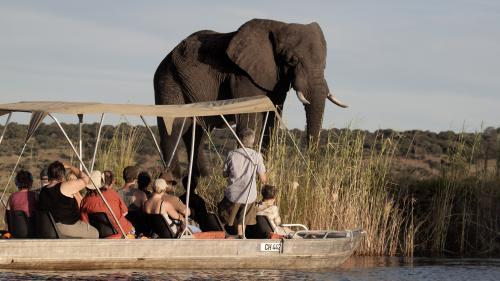 Vous en parlerez aujourd'hui. Le Botswana autorise la chasse aux éléphants, une affaire politique et économique