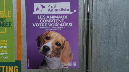 """""""Une réaction aux horreurs qu'on fait subir aux animaux"""": le Parti animaliste crée la surprise aux européennes"""