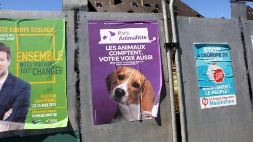 """""""C'est une cause qui me tient à cœur"""" : quisont les électeurs qui ont porté le Parti animaliste à plus de 2% aux européennes ?"""